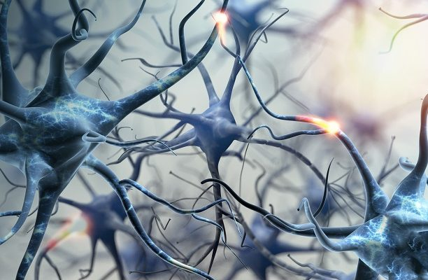 Cérebro humano cria neurônios ao longo da vida, revela pesquisa