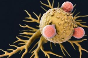 Células que dão início à formação de tumores são rastreadas por cientistas belgas