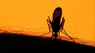 Zika vírus pode causar doenças neurológicas graves sem apresentar sintomas