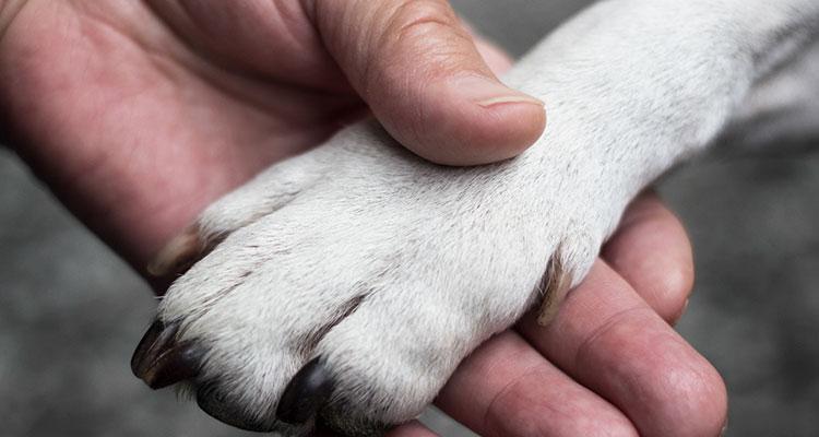 Idoso que sofreu AVC volta a conversar após ver seu cachorro