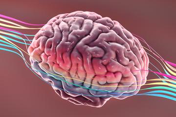 Neuropsicologia e as atividades cognitivas